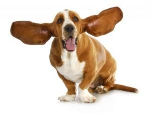 dog-ears-300x225